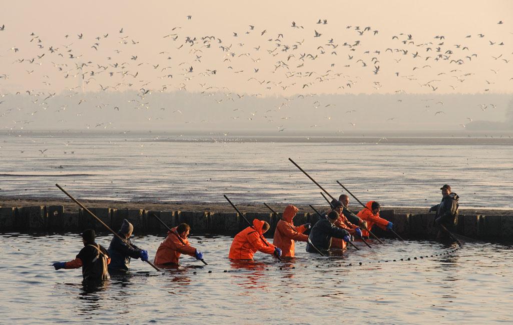 Peitzer Teiche, Karpfen, Fischerei